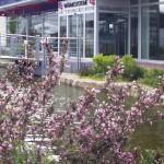 Außenanlage des Unternehmens GS Buerstadt
