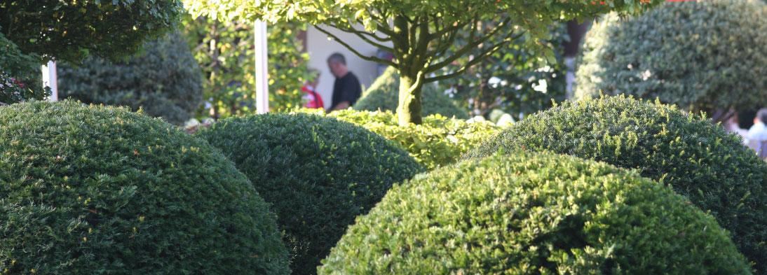 Buchskugeln im Fürstlichen Garten in Langen