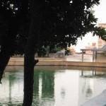 Abendstimmung an einem Schwimmteich in ländlicher Umgebung