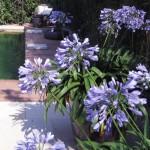 Gartengestaltung auch um den Naturpool herum - eine Augenweide!