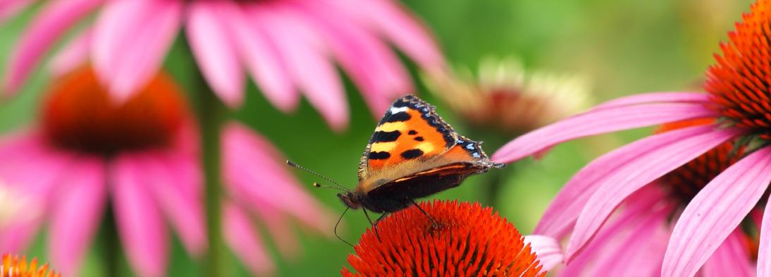 Ein Paradies für Schmetterlinge