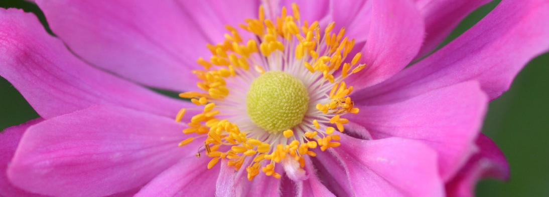 Header_Makro-Blume2